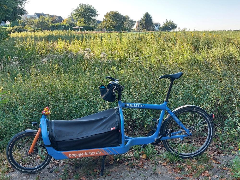 #mdRzA #bluemoon#entchen #königsdorf #frechen #nebenstrecke #natur #gras #brennesseln #pflanze #waldweg #feld #mühle