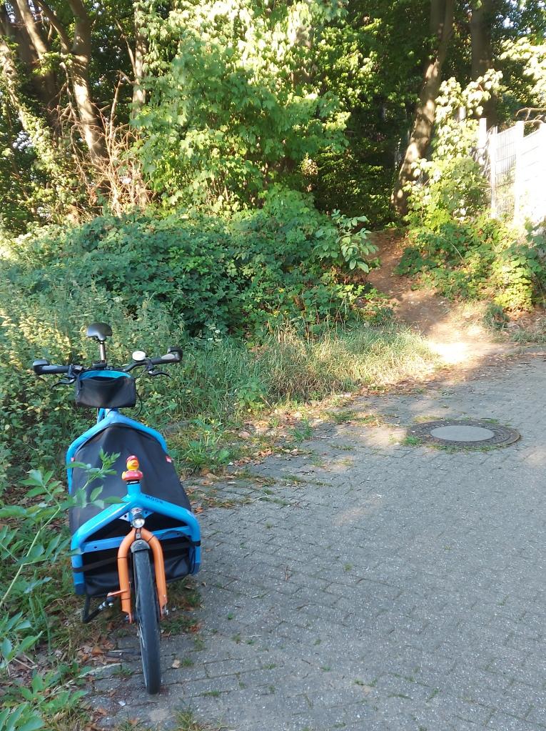 #mdRzA #bluemoon#entchen #königsdorf #frechen #nebenstrecke #natur #gras #brennesseln #pflanze #waldweg
